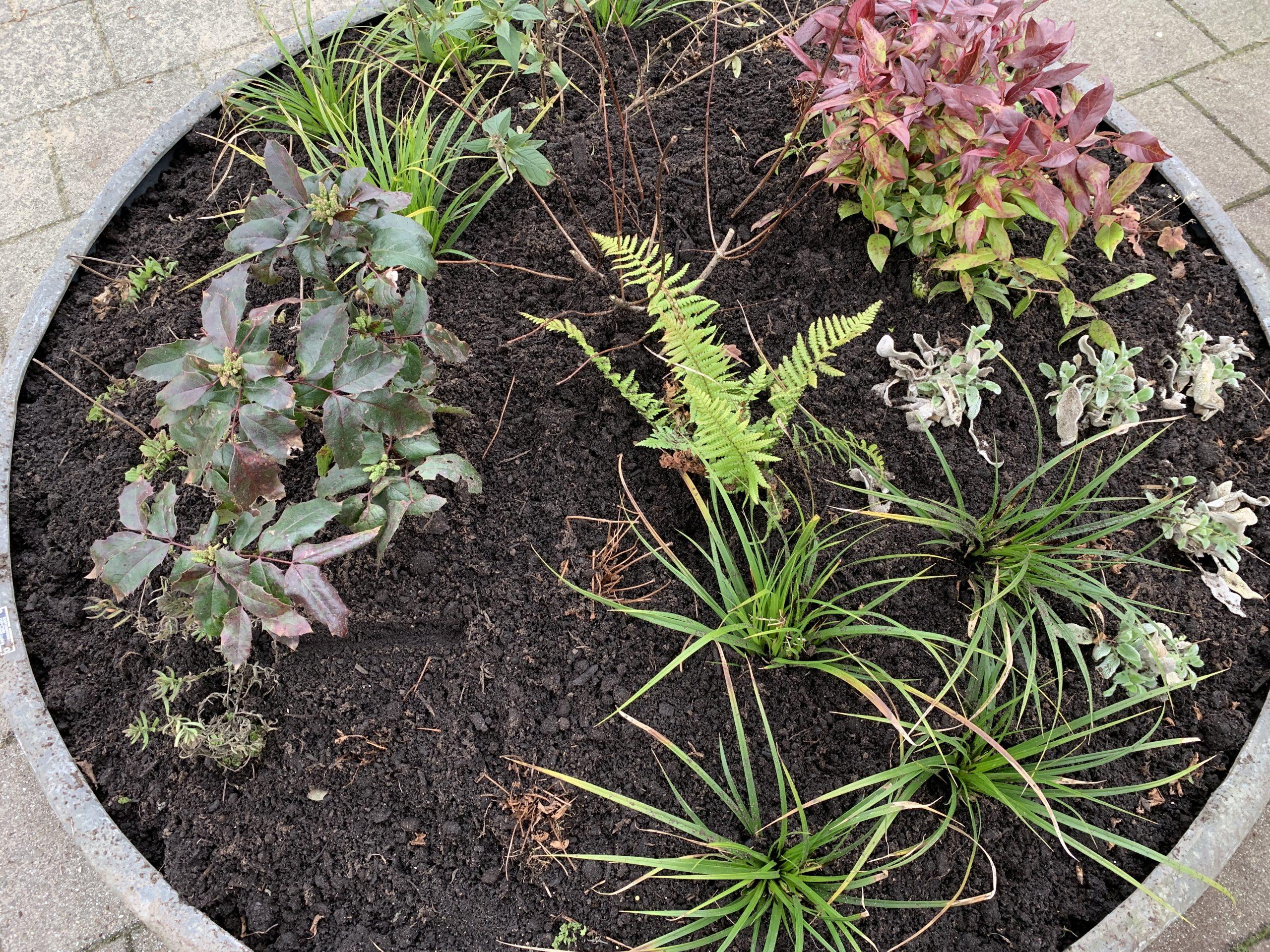 Plantenschaal Bergpolder